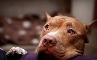 В Татарстане утвердили список опасных пород собак