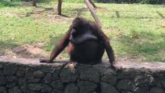 Новости Общество - В Казани вновь перенесли открытие нового зоопарка