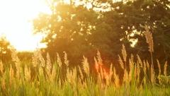 Новости Погода - Предстоящим летом погода будет разной