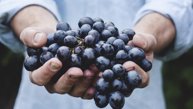 Казанцев приглашают посетить выставку винограда