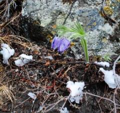 Новости  - В выходные татарстанцев ожидает снег и порывистый ветер