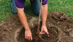 Новости  - На Казанском регионе ГЖД высадят более 1000 деревьев