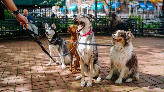 В МВД по РФ подготовили список пород собак, которые должны выгуливаться только в наморднике