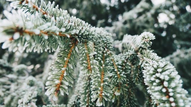 В России зима становится короче