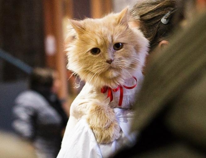 Новости  - В Казани пройдёт выставка бездомных кошек «Дорога домой»