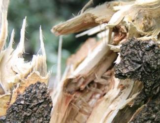 В Казани дерево рухнуло на прохожую