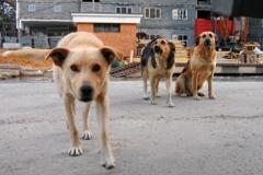 Новости  - Зоозащитники Казани, Питера и Москвы требуют «Универсиаду без крови»