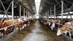 Новости  - На границе с Татарстаном выявлен очаг опасной коровьей болезни