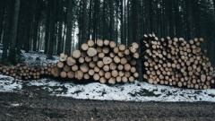 Новости Общество - В Татарстане в этом году закупят лесохозяйственную технику