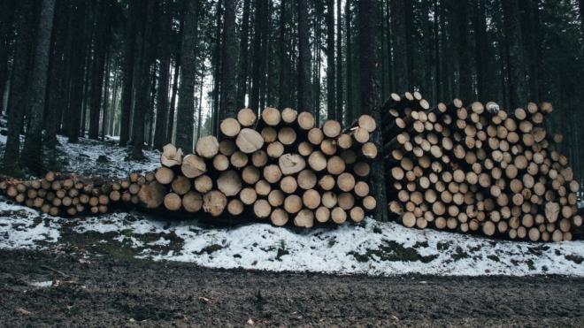 В Татарстане в этом году закупят лесохозяйственную технику