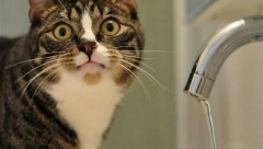 Новости Общество - В поселке Крутушка не будет воды сутки