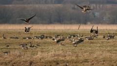 Новости  - С открытия сезона охоты в Татарстане произошло уже 4 несчастных случая
