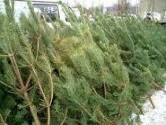 Непроданные новогодние елки отдают даром (Татарстан)