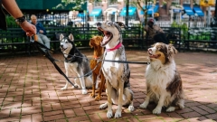 В исследовании доказали пользу контакта с собаками
