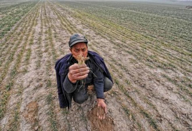 Новости  - Татарстану грозит неурожай