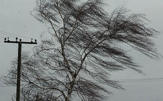Из-за штормового ветра более 11 тыс. жителей Татарстана остались без электроэнергии