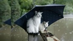 Новости  - В Татарстане льют дожди