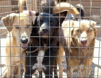 В Казани стартовала акция в поддержку приюта для собак
