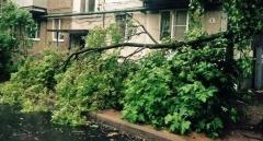 Новости  - Ураган повалил более 200 деревьев в центре Казани