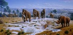 Новости  - В Казани обнаружили сто зубов мамонтов