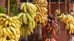 Новости  - Бананы бьют рекорды: цены вРоссии взлетели