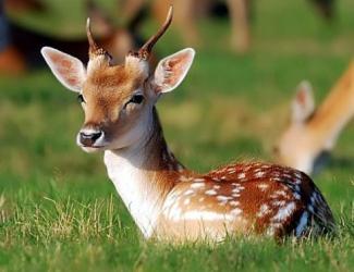 В Казанский зооботсад прибыли редкие олени