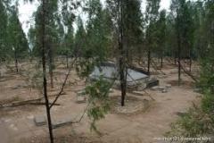 Новости  - В Казани осенью высадят еще 40 тысяч деревьев