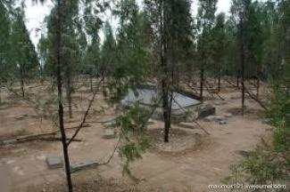 В Казани осенью высадят еще 40 тысяч деревьев