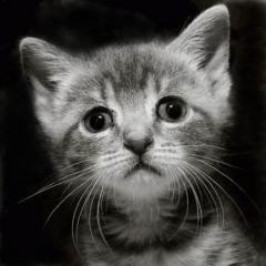 Новости  - Казанский пенсионер, убивший котёнка за украденный кусок мяса, пойдёт под суд