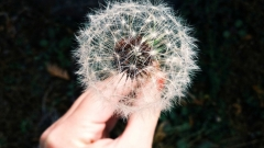 Новости Медицина - В России становится всё больше аллергиков