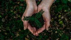 Новости  - Республика приняла участие в акции «Сохраним лес»