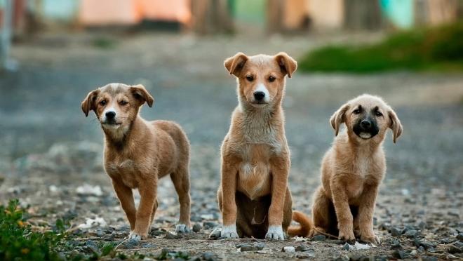 Новости  - В Татарстане больше всего бездомных животных
