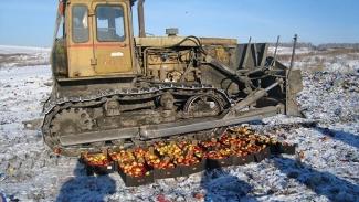 В Казани бульдозерами уничтожено свыше 900 кг польских яблок и груш