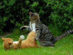 Новости  - Успей проголосовать за «Мартовского кота»