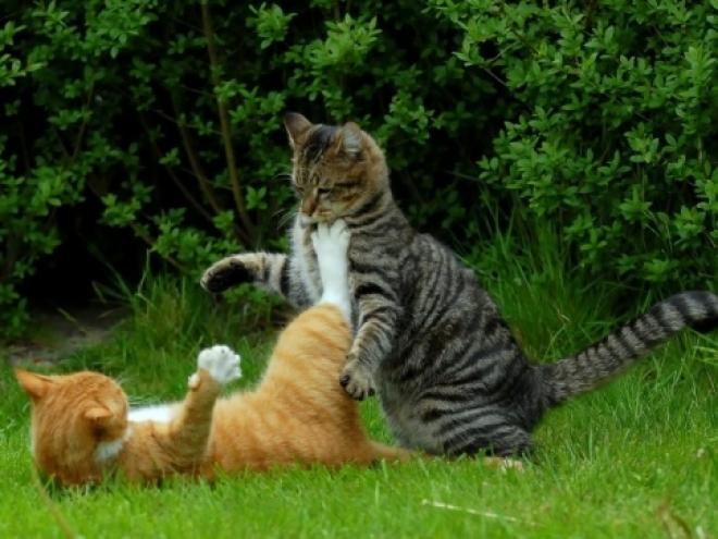 Успей проголосовать за «Мартовского кота»