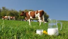 Новости  - Сегодня вступил запрет на ввоз белорусского молока в Россию