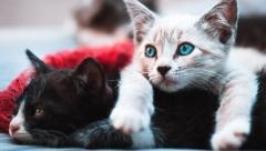 Новости Не проходите мимо! - В воскресенье любой желающий сможет помочь бездомным животным