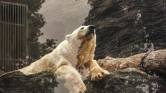 Новости  - Рустам Минниханов сообщил о завершении строительства зоопарка