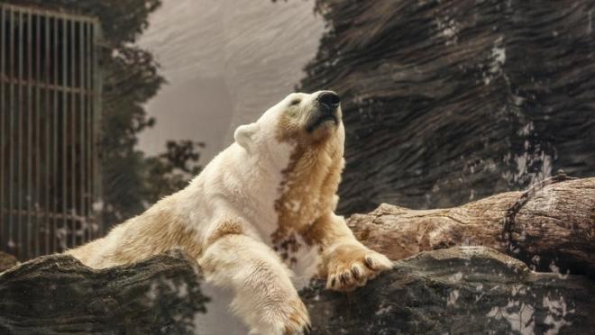 Рустам Минниханов сообщил о завершении строительства зоопарка