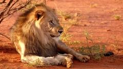 Новости Общество - Зоопарк «Река Замбези» откроется в конце августа