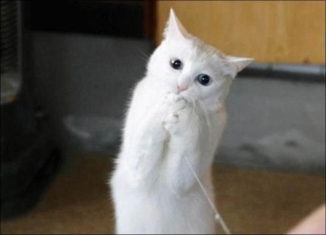 Коты Казани борются за «лайки»: поддержи пушистиков
