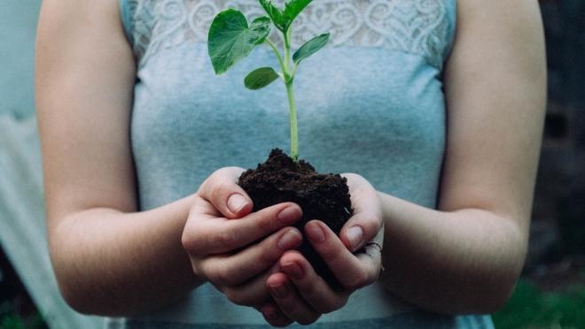 На территории Авиастроительного и Ново-Савиновского районов высадили более 1,7 тыс. деревьев