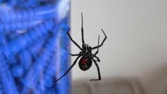 Смертельно опасный паук был обнаружен в лесах Татарстана