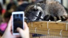 Новости  - ГД РФ приняла закон о запрете контактных зоопарков в России