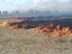 Новости  - В Татарстане вводят особый противопожарный режим