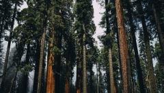 Новости  - В столице Татарстана посадили 3,7 тыс. деревьев