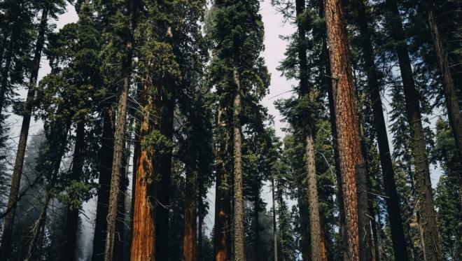 В столице Татарстана посадили 3,7 тыс. деревьев