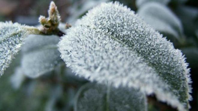 Сегодня днём ожидается сильный ветер и небольшой снег