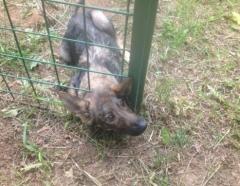Новости  - В Татарстане спасатели освободили застрявшего в заборе щенка