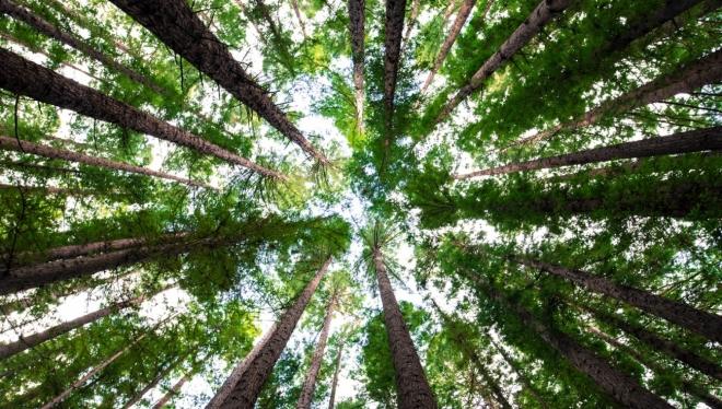 25 апреля в Казани пройдет две экологические акции